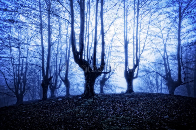 Horror forest at night. Nightmare and horror forest at night royalty free stock photos
