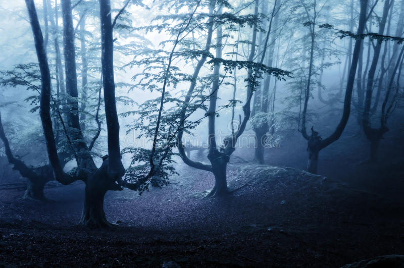 Horror forest at night. Nightmare and horror forest at night stock photography