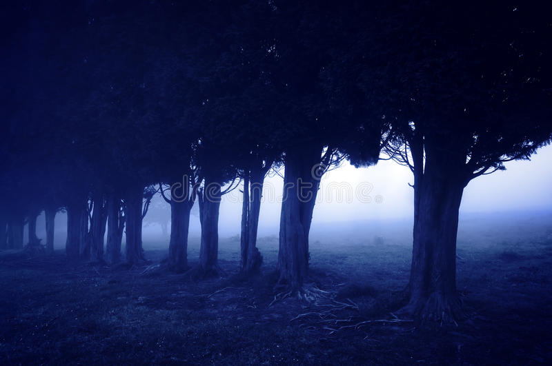 Horror forest at night. Nightmare and horror forest at night royalty free stock photo