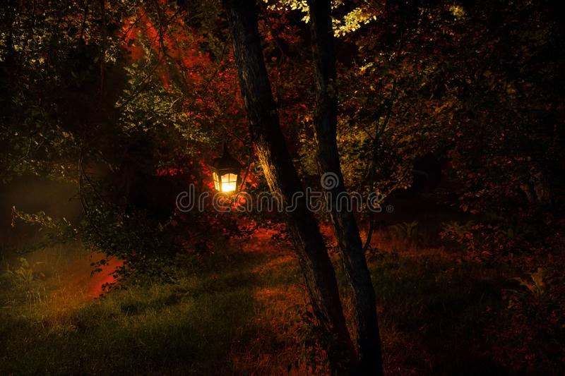 Horror Halloween concept. Burning old oil lamp in forest at night. Night scenery of a nightmare scene. Selective focus royalty free stock photo