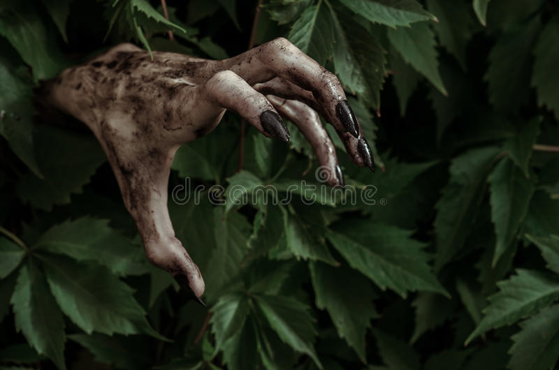 Horror and Halloween theme: terrible dirty hand with black fingernails zombie crawls out of green leaves, walking dead apocalypse. Studio stock photos