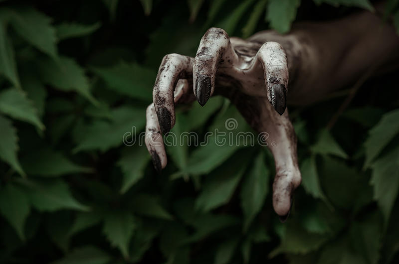 Horror and Halloween theme: terrible dirty hand with black fingernails zombie crawls out of green leaves, walking dead apocalypse. Studio royalty free stock photos