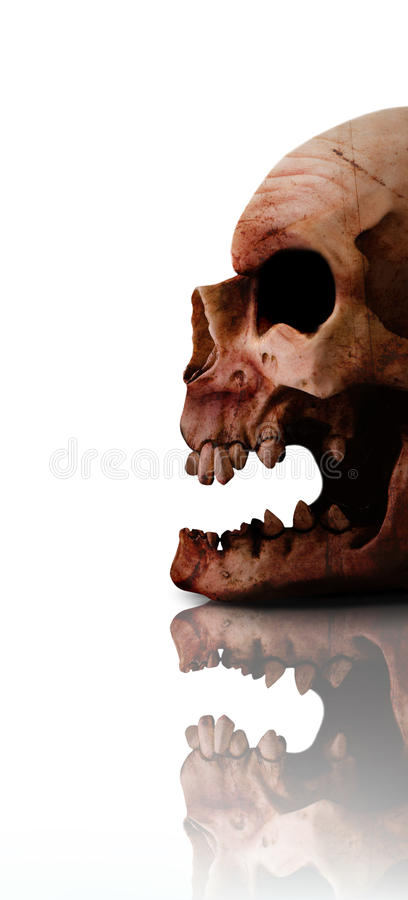Download Horror Head stock photo. Image of dead, chilling, halloween - 17114530