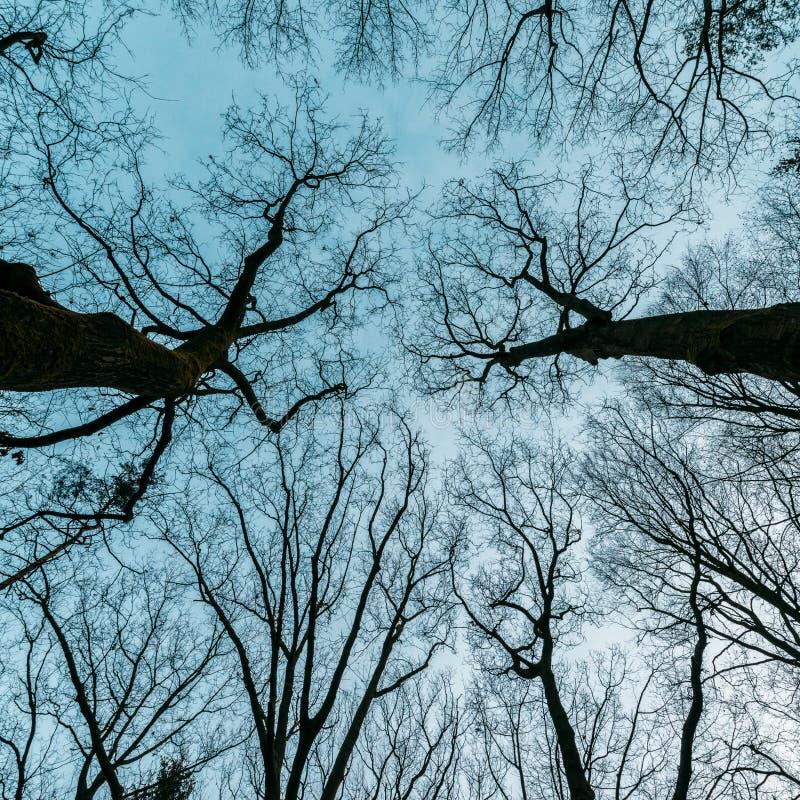 Horror, misterioso, árbol de la novela de suspense imagen de archivo