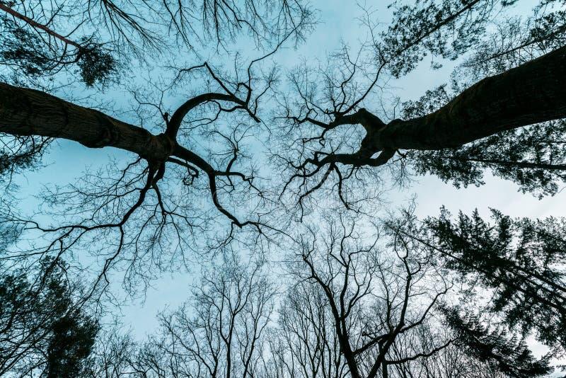 Horror, misterioso, árvore do filme policial imagem de stock royalty free