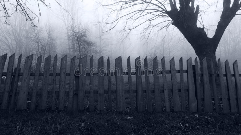 Horror scene of the Misty Forest. Abandoned Horror scene of the Misty Forest royalty free stock image