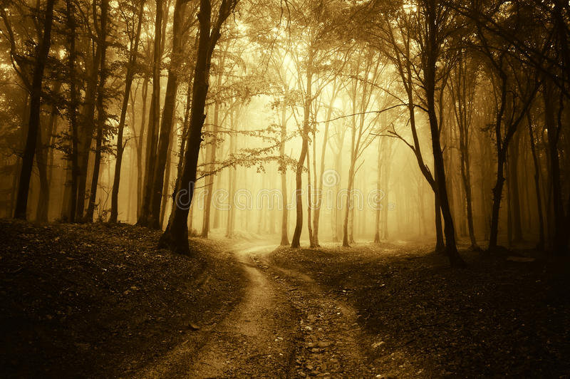 Horror scene with a road through golden forest. A eerie scene with a horror feeling with a road through golden forest with dark trees royalty free stock photo