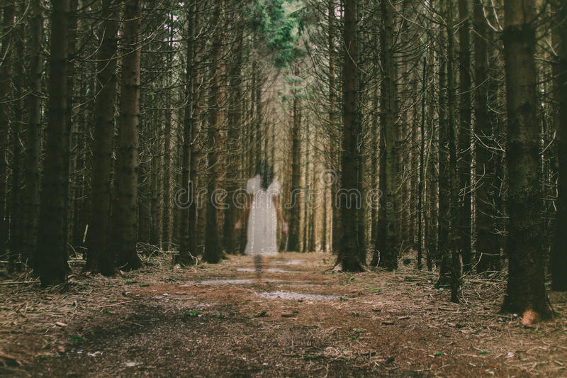 Horror scene of a scary woman. Female ghost in white dress in the middle of spooky forest royalty free stock image