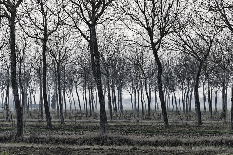 Horror trees and branches stock photography