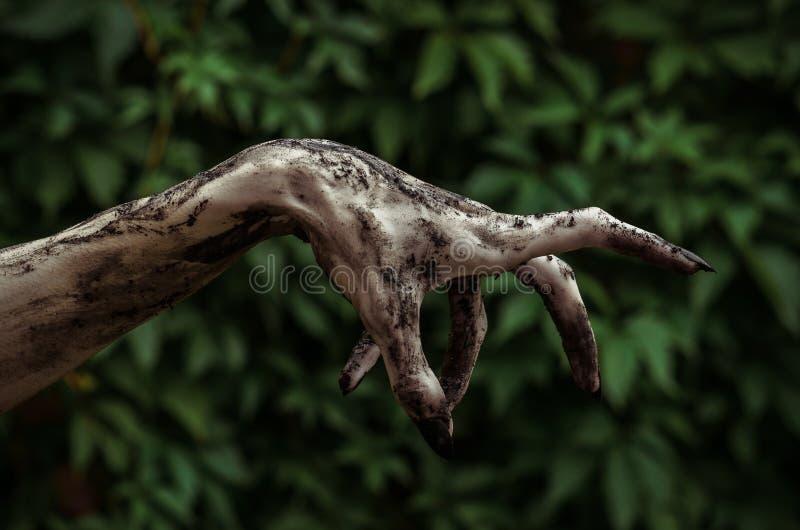 Horror- und Halloween-Thema: Die schrecklichen Zombiehände, die mit schwarzen Nägeln schmutzig sind, erreicht für grüne Blätter,  lizenzfreie stockbilder
