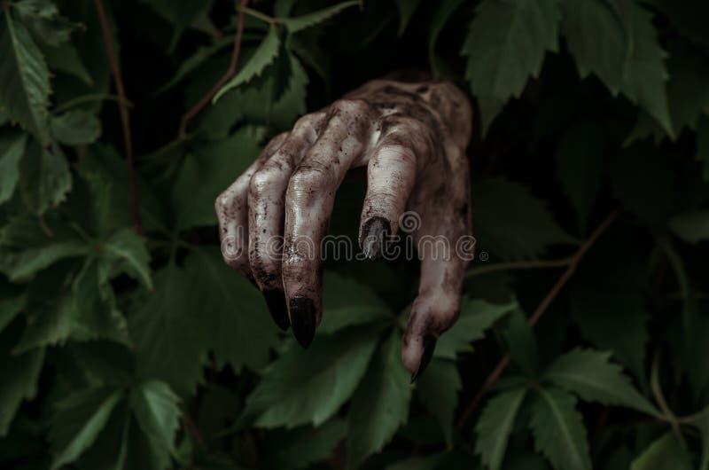 Horror- und Halloween-Thema: schreckliche schmutzige Hand mit schwarzem Fingernagelzombie kriecht aus grünen Blättern, gehende to lizenzfreie stockfotografie