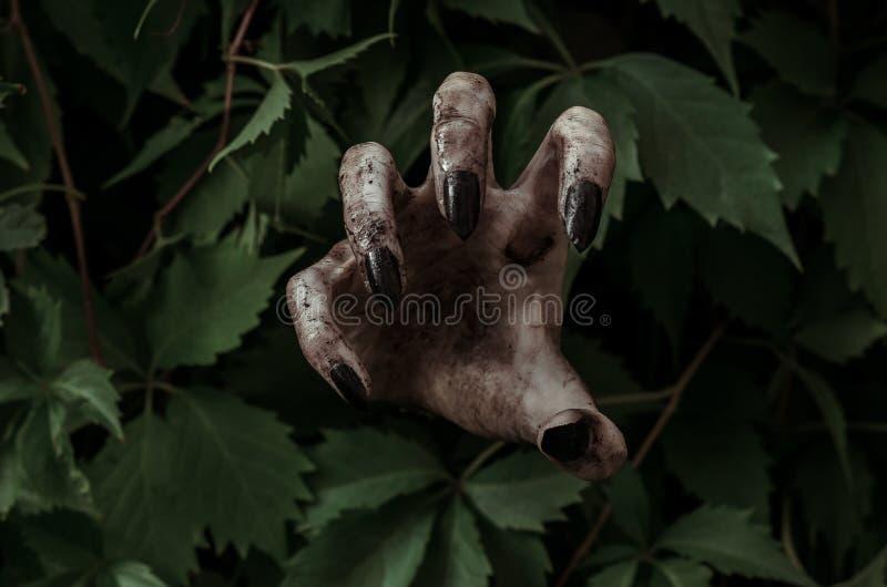 Horror- und Halloween-Thema: schreckliche schmutzige Hand mit schwarzem Fingernagelzombie kriecht aus grünen Blättern, gehende to lizenzfreie stockbilder