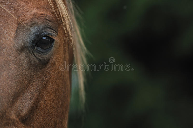 Hors eye stock photo