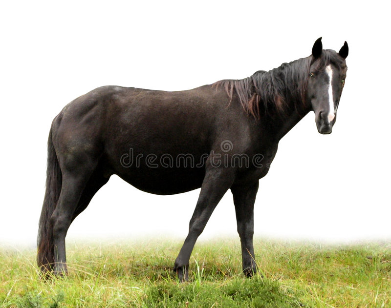 Horse 1 stock image