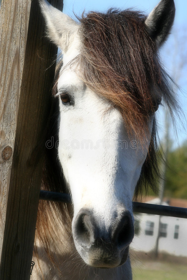 Download Horse stock image. Image of meadows, nature, farm, fields - 101041
