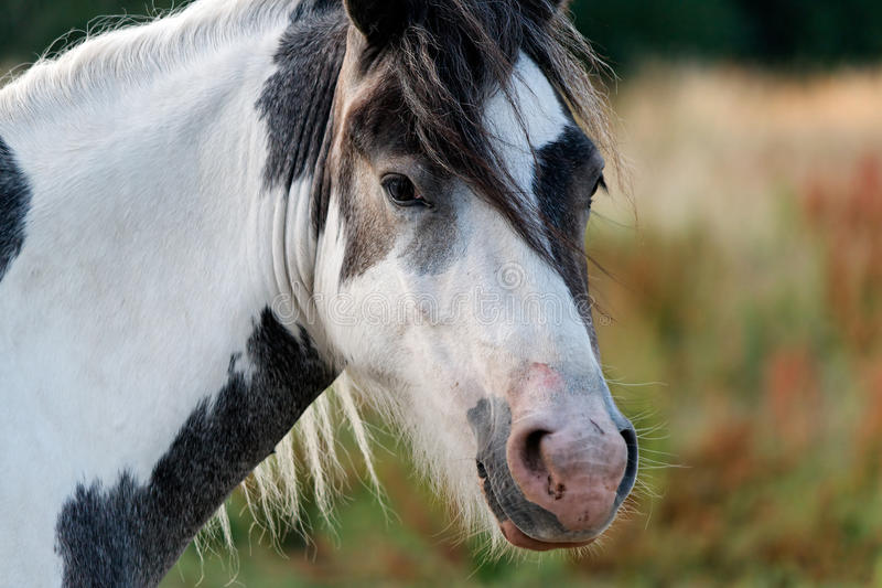 Download Horse stock image. Image of pasture, solitude, animal - 10247783