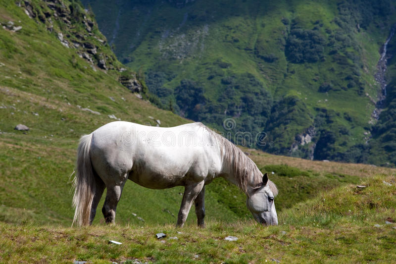 Download Horse stock image. Image of green, harness, power, farm - 10289075