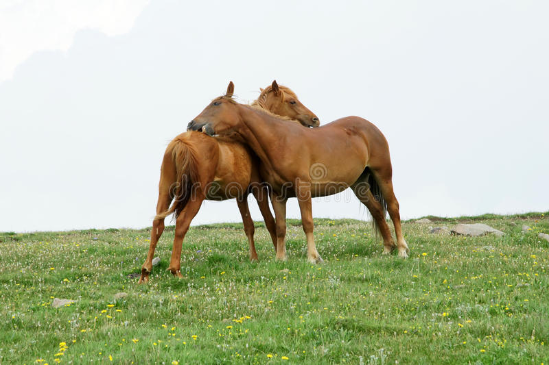 Download Horse Royalty Free Stock Photography - Image: 10363077