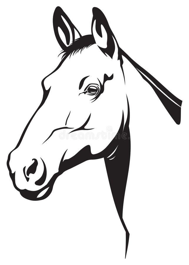 Free Horse Stock Photography - 10464572