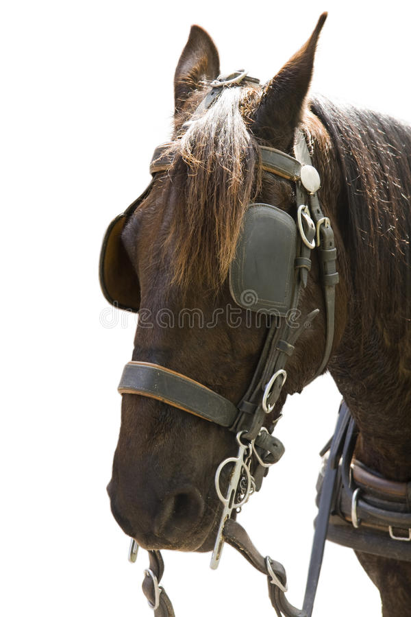 Download Horse stock photo. Image of mounting, tack, harness, bridle - 11598228