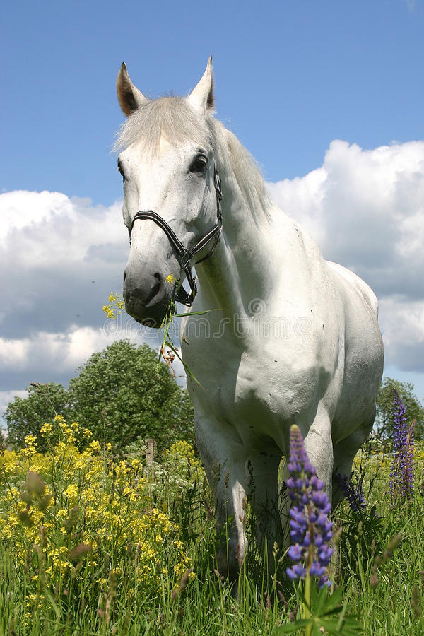 Free Horse Royalty Free Stock Photos - 11678338