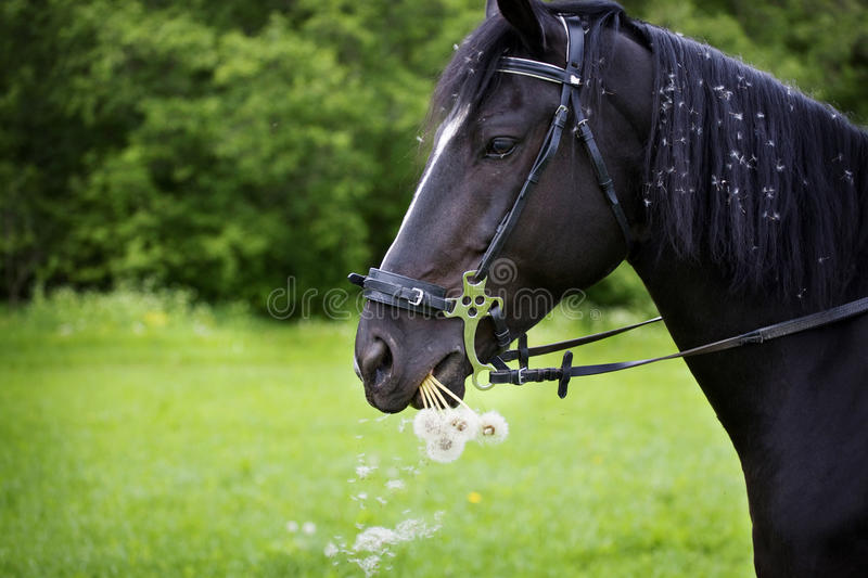 Download Horse stock image. Image of comic, funny, face, hind - 12085247
