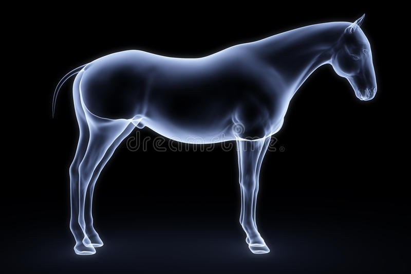 Horse. X-ray. 3d render stock illustration