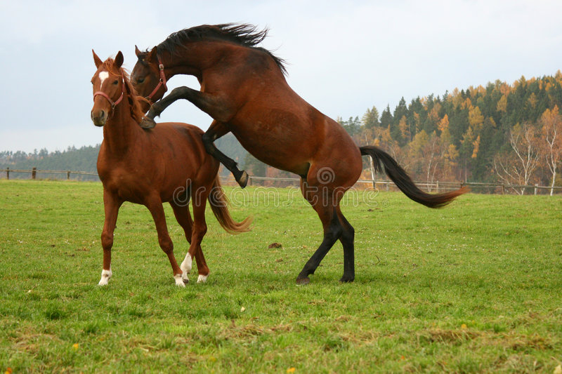 Horse 13 royalty free stock photos
