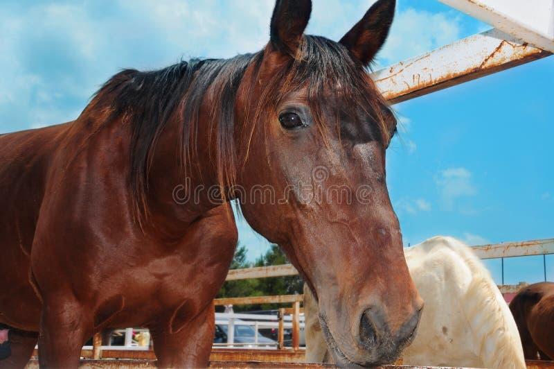 Horse. Closeup of a horse on a farm on the blue sky stock photos