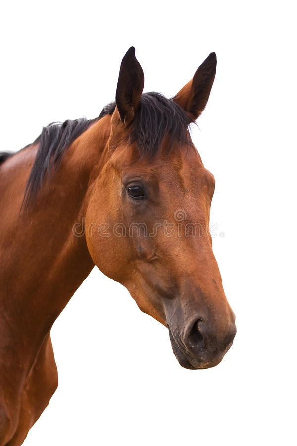 Free Horse Royalty Free Stock Images - 15049589