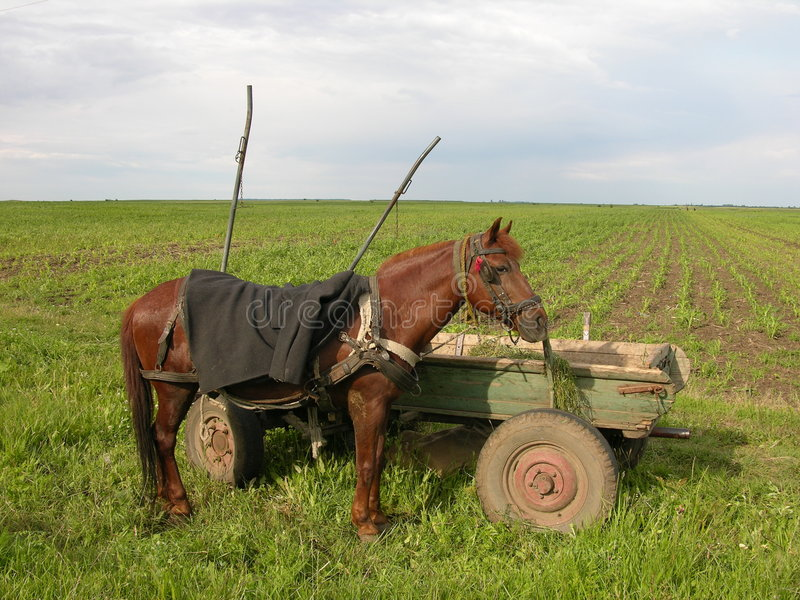 Download Horse stock image. Image of field, carriage, mammals, side - 172823
