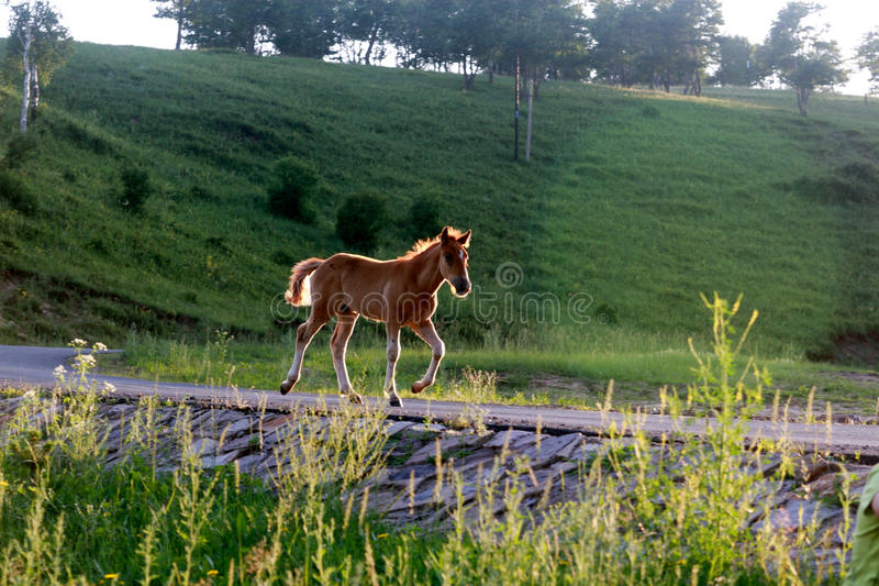 Download Horse stock photo. Image of rural, brown, horse, care - 18721372