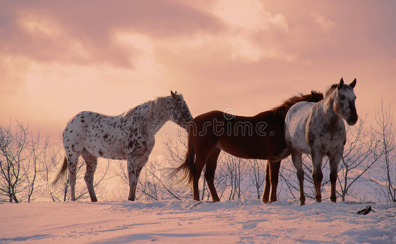 Download Horse Stock Photography - Image: 1961462