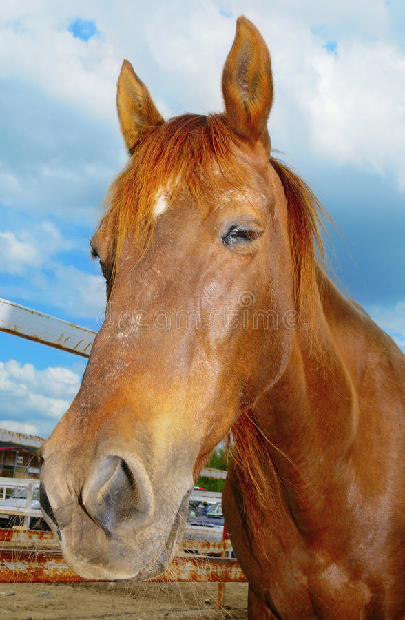 Horse. Closeup of a horse on a farm over the blue sky royalty free stock photo