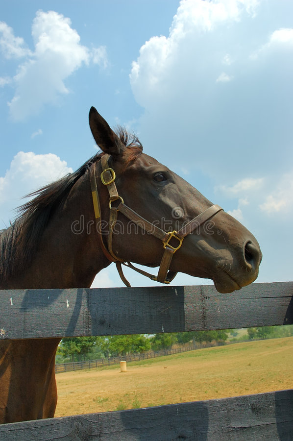 Download Horse Stock Images - Image: 197554