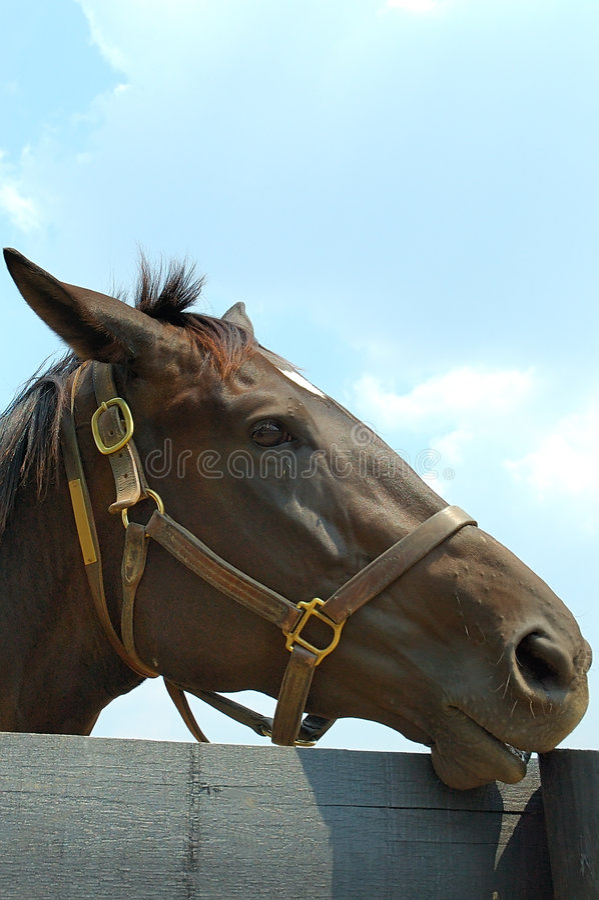 Download Horse stock photo. Image of headshot, farmland, work, ears - 197556