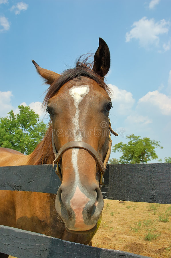Download Horse Royalty Free Stock Photography - Image: 197557