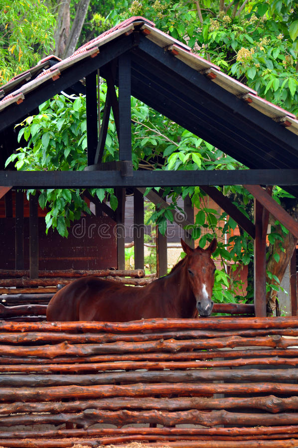 Download Horse 2 stock photo. Image of mammal, horse, tame, brown - 26567976