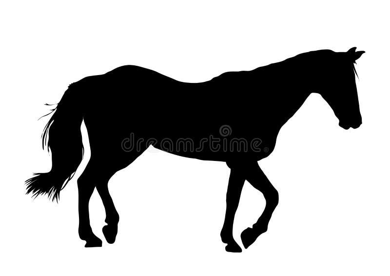 Horse 2 royalty free stock photo