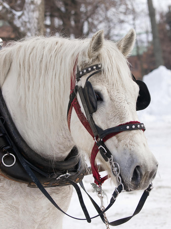 Download Horse Stock Images - Image: 23046304