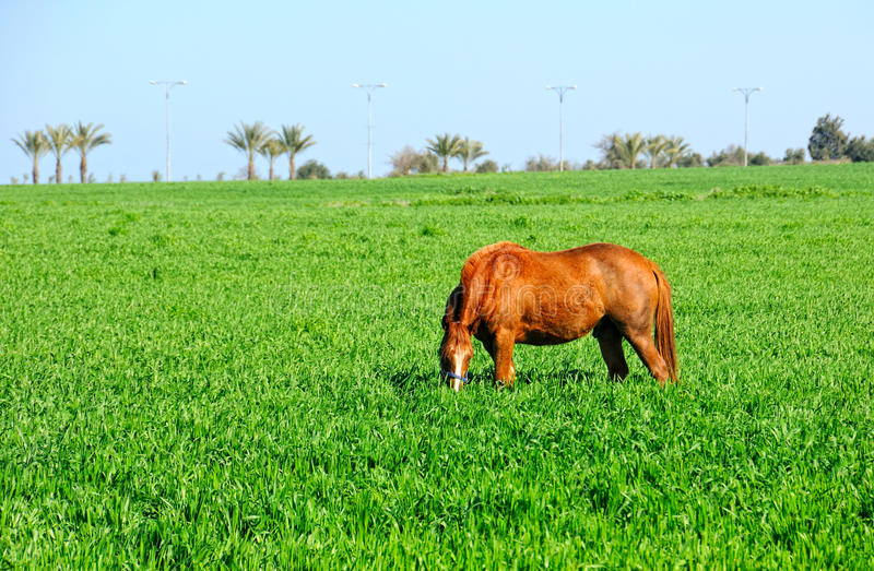 Download Horse stock image. Image of breeding, steed, rural, village - 23326191