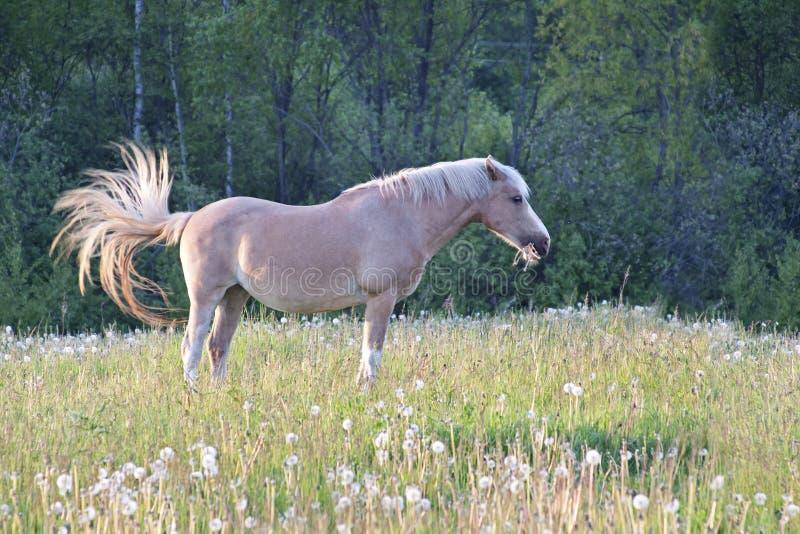 Horse grazing in a meadow stock photos
