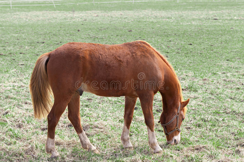 Download Horse stock photo. Image of animal, naturally, husbandry - 24508162