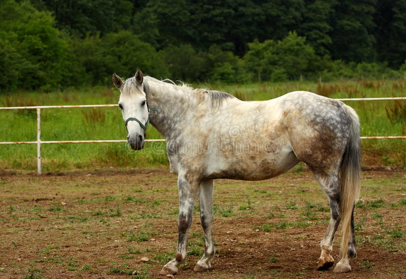 Download A horse stock image. Image of animal, daylight, beauty - 24983437