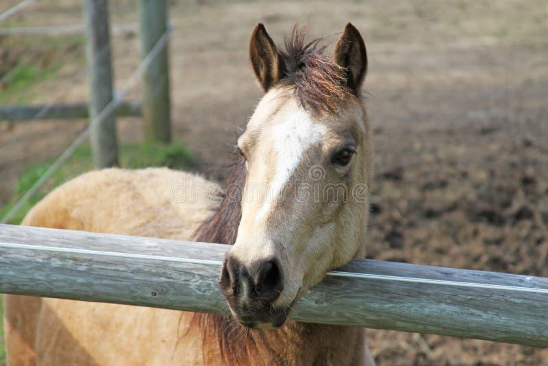 Download Horse stock photo. Image of horse, shack, farm, barn - 25262528