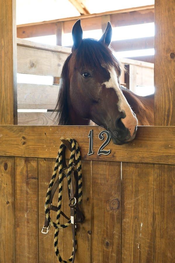 Free Horse Stock Photos - 25927883