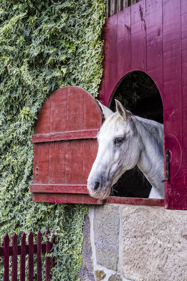Download Horse stock image. Image of nature, gallop, farm, equestrian - 26031001