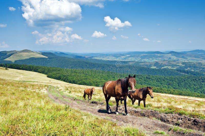 Download Horse stock image. Image of summer, landscape, freedom - 26126341