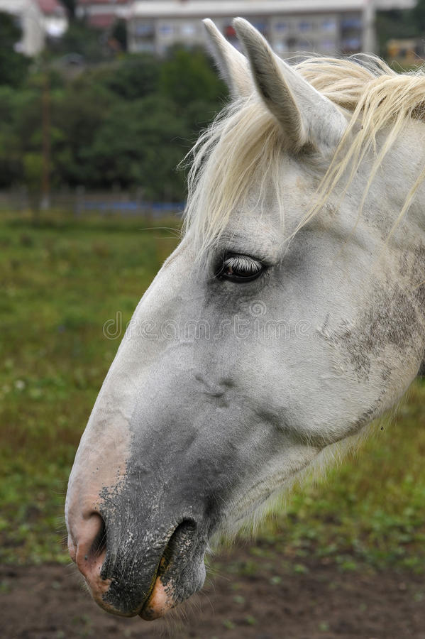 Download Horse Royalty Free Stock Photography - Image: 26596927