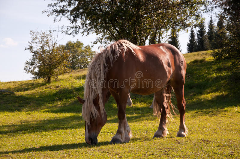 Download Horse stock photo. Image of cloud, breed, landscape, animal - 26639118